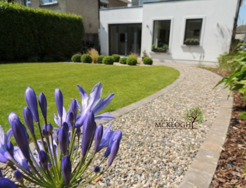 Modern style garden to complement a modern extension – Ennis Rd, Limerick City