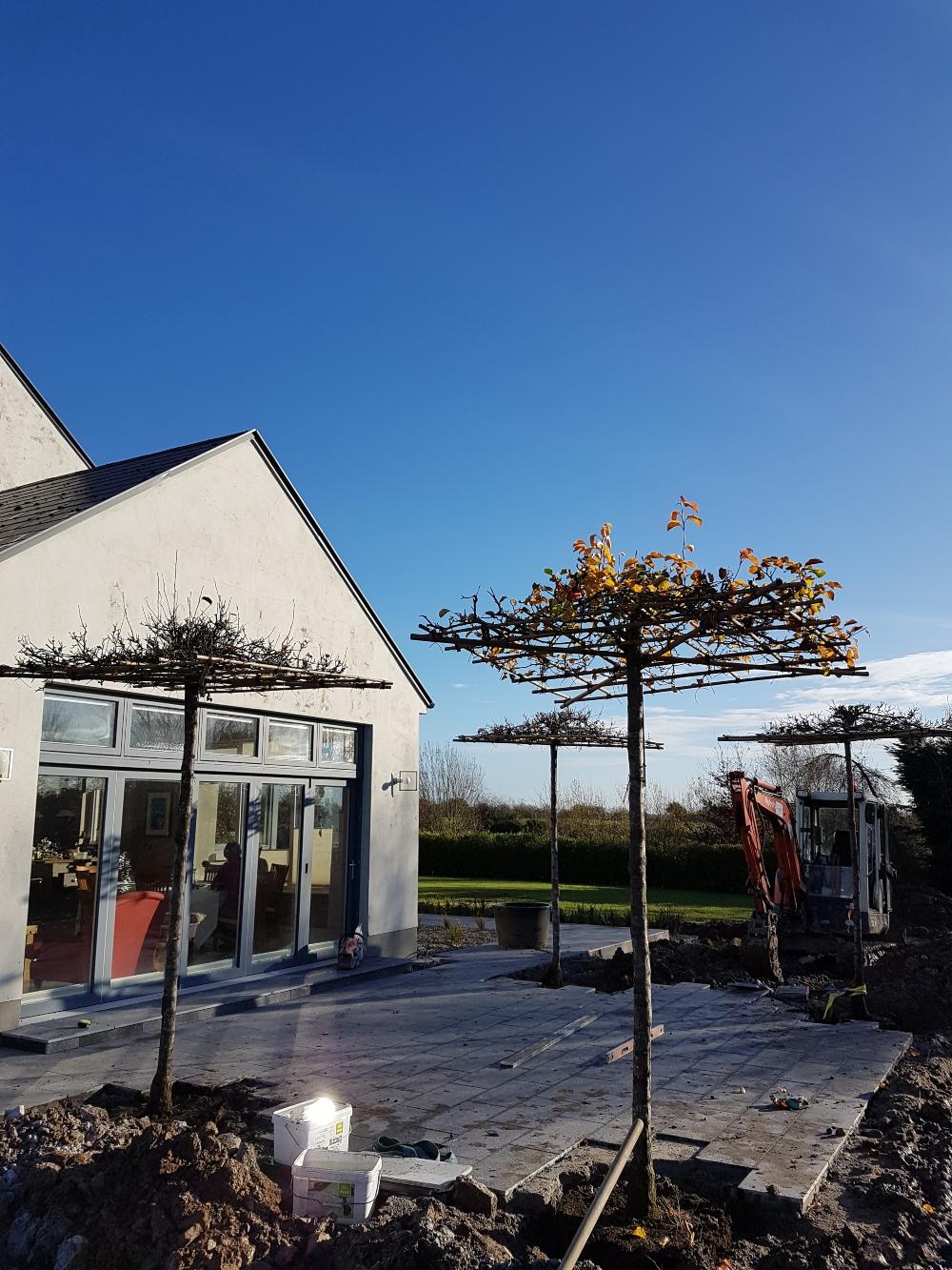 patio-design-trees-landscapers-limerick